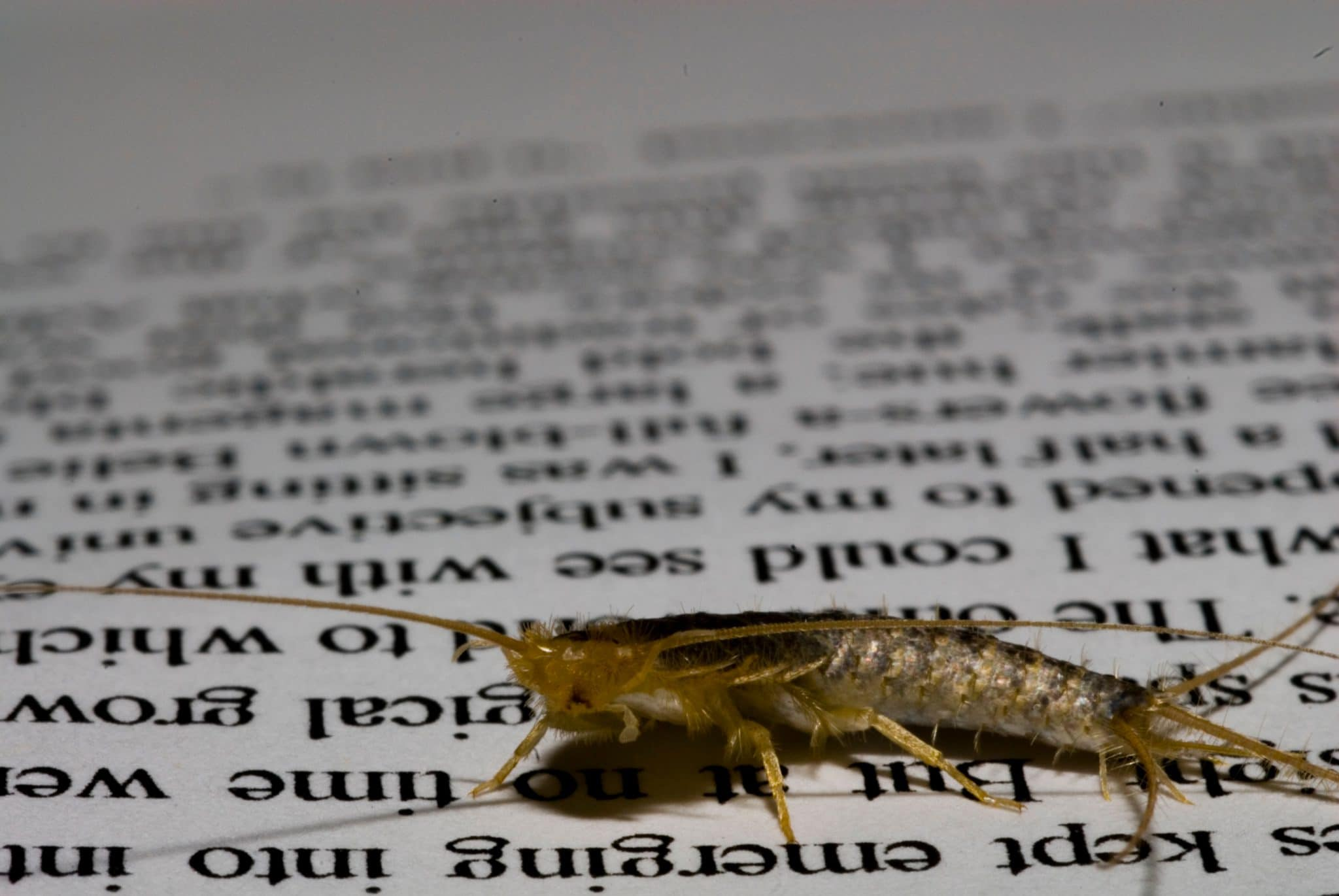 a silverfish on a document