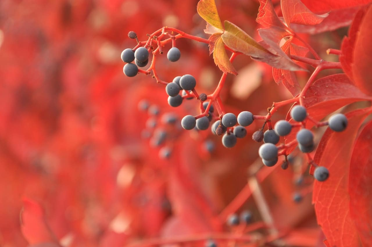 berries-tree